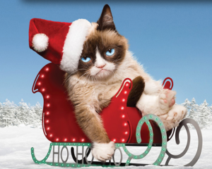Don't blame Grumpy Cat. She's just a damn cat.